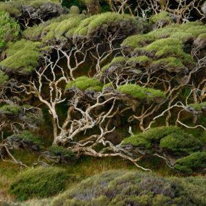 Warum Neuseeland - Wald